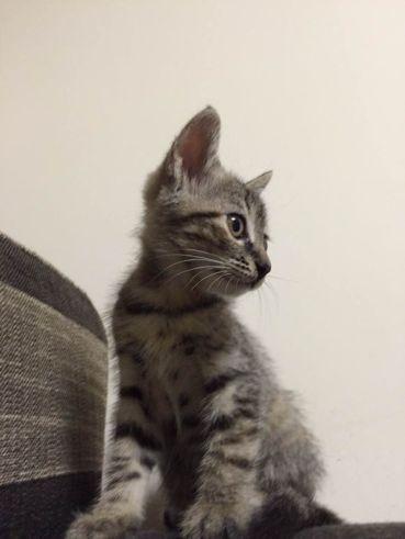 1 small cat